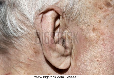 Old  Ear In Macro