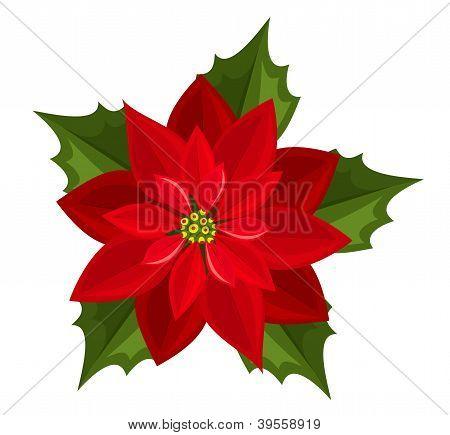Rojo flor de Pascua. Ilustración del vector.