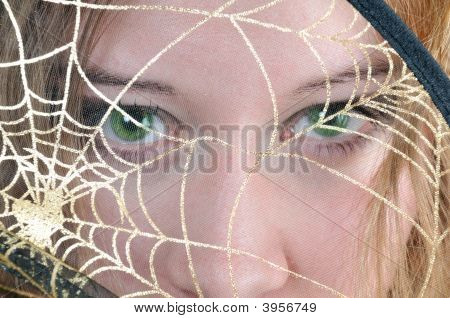 Green Eyes Look Through Spider'S Web