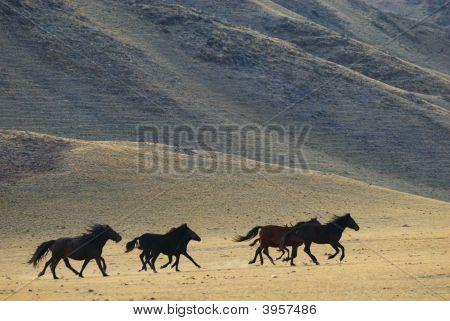 Running Wild Horses In Desert Mountains