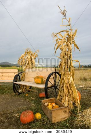 Cornstalks And A Bench.