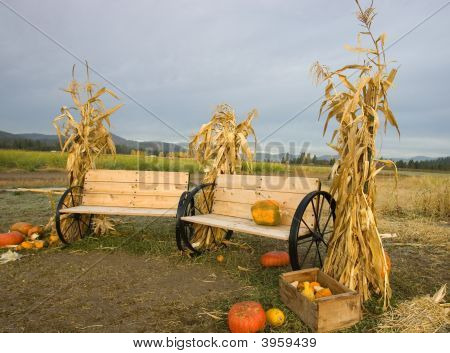 Cornstalks, Pumpkins, And Benches.