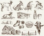 stock photo of animal husbandry  - breeding goats - JPG