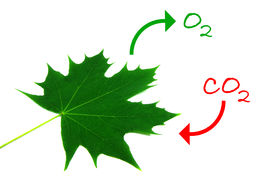 foto of carbon-dioxide  - Illustration of the natural process of photosynthesis - JPG