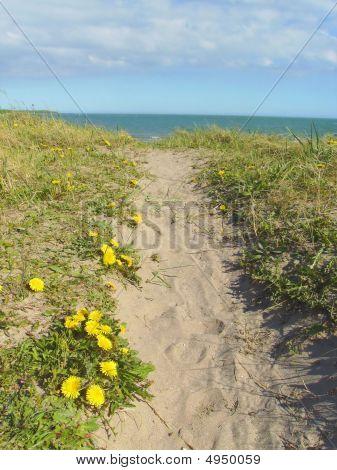 Sandhill Path To The Sea