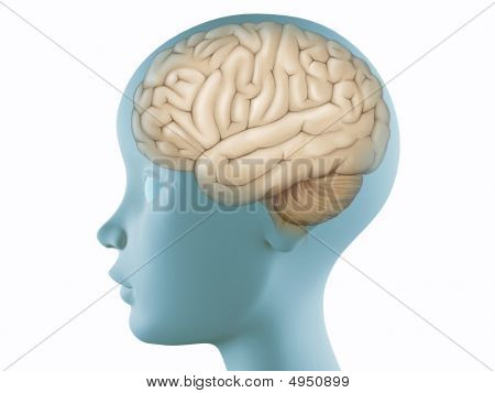 Brain In Profile Head