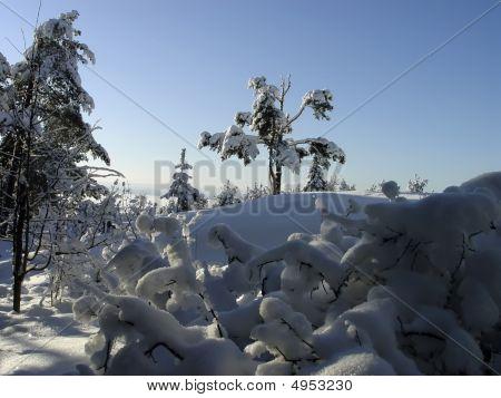 In The Karelian Wood