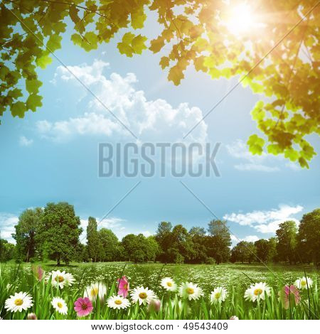Beauty Meadow With Daisy Flowers