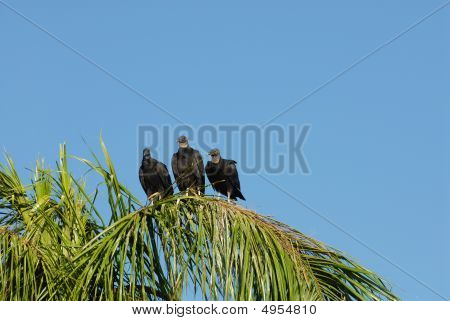 Three Wise Vultures