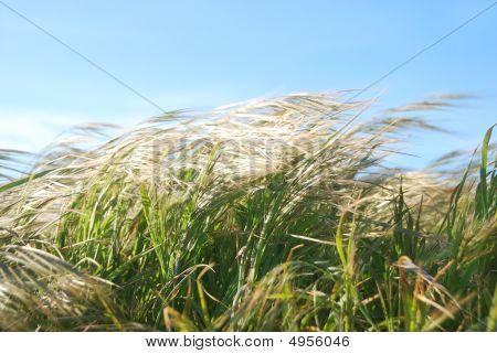 Windy Day Grass