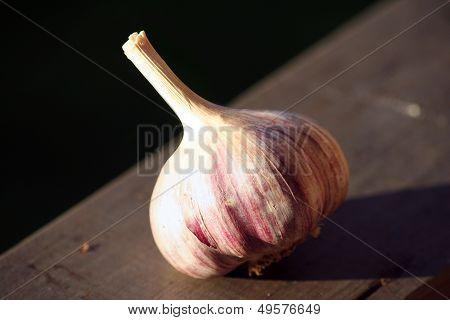 Allium Sativum, Commonly Known As Garlic