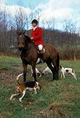 stock photo of bloodhound  - Master of a fox hunt sits mounted on his horse with his hounds around him - JPG