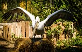 picture of schoenbrunn  - Portrait of Dalmatian Pelican in Zoo Schoenbrunn - JPG