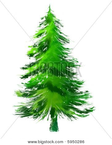 Christmas Tree or Pine Tree on White Background