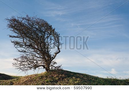 Wind Bent Tree