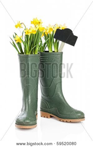 Spring daffodils in wellington boots with garden sign
