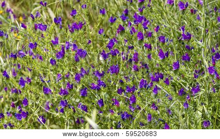 Bright Purple Flowers Swaying
