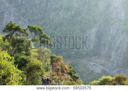 Exotic green trees and bushes in a park with a rock on the background