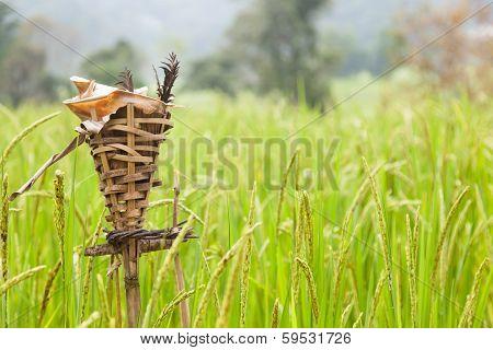 Rites Rice