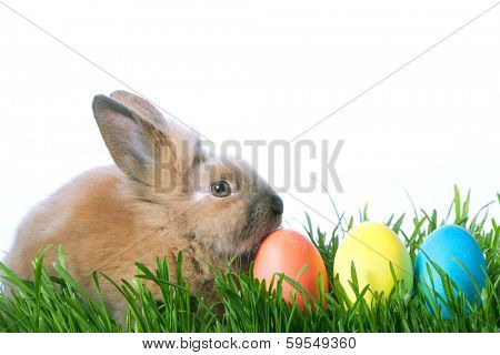 easter color eggs and rabbit on green grass over white background