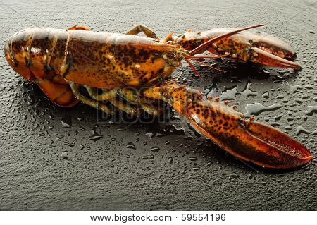lobster over black stone