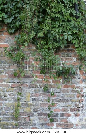 Brick wall and plants
