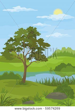 Landscape, pine tree and lake
