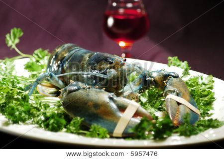 Rare blue lobster