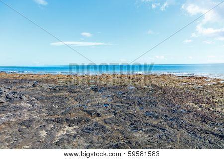 hardened lava on the beach