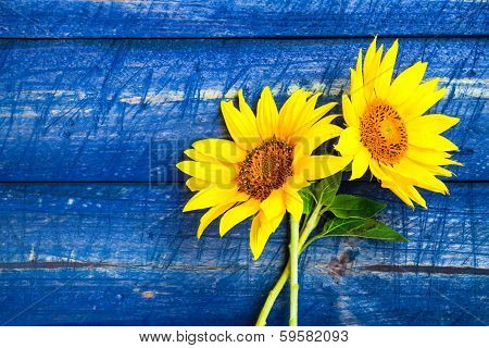Two Yellow Sunflowers Painted Fence
