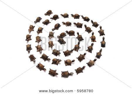 Turtle Spiral