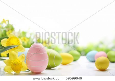 Easter eggs and daffodil flower on white background