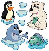 pic of polar bears  - Arctic animals collection on white background  - JPG