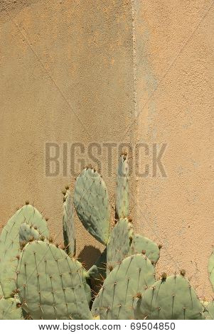 Cactus Against Wall