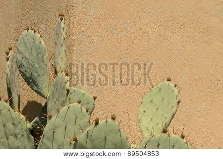 Cactus And Wall