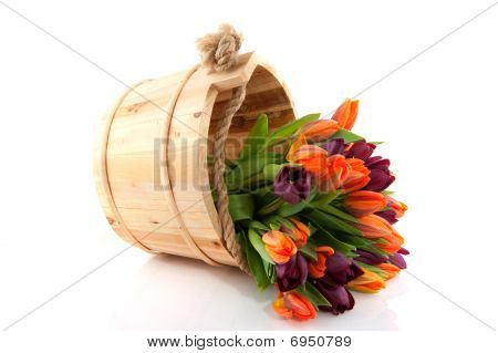 Colorful Tulips In Wooden Bucket