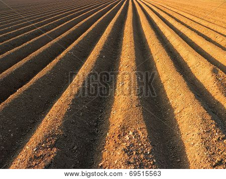 Furrows Ready For Sowing