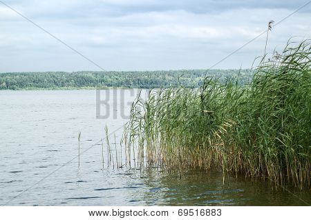 Reeds Along The Water's Edge