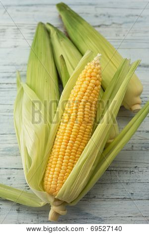 Four corn cobs with husks