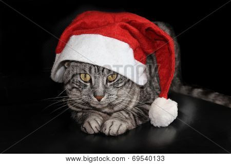 Cat With Santa Claus Hat, On Black Background