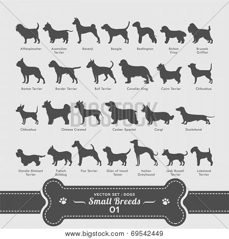 Vector Set : Dogs | Small Breeds Collection 01