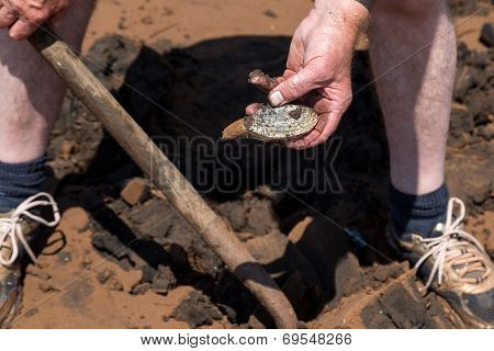 A man digging soft shell clams on a Prince Edward Island beach.