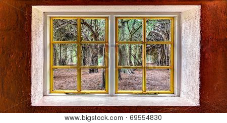 Magical Trees Seen Through A Window
