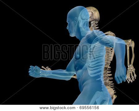Human or male 3D anatomy with bones or skeleton and face or skull details isolated on black background