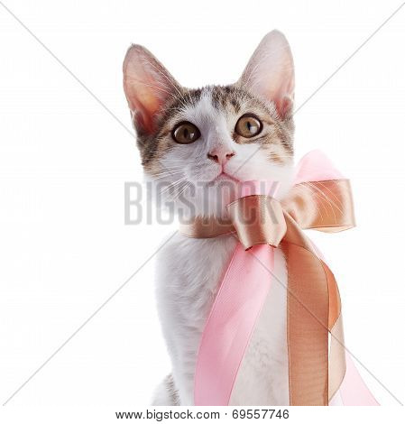 Portrait Of A Kitten With A Bow.