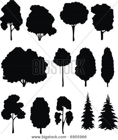 Trees. Vector set.