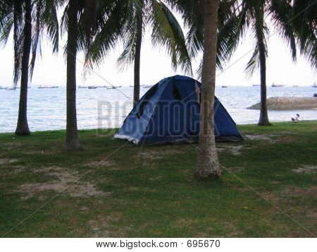 Camping Tents Among Coconut Trees