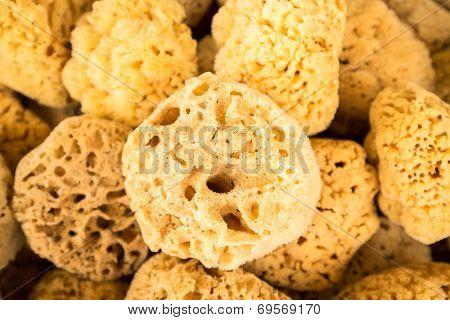Collection Of Sea Sponges In Florida