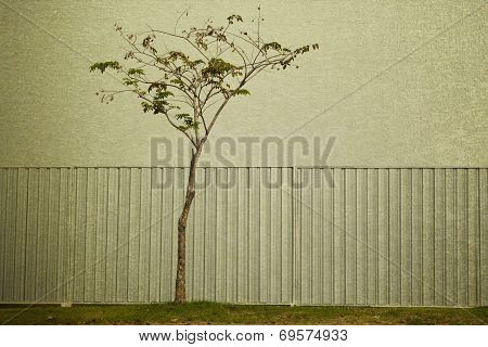 Zinc Fence And Tree