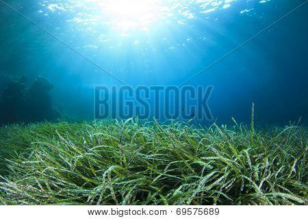 Underwater background green seaweed blue water